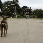 Argentyna – Villa Gesell – sto trzydziesty szósty dzień wyprawy
