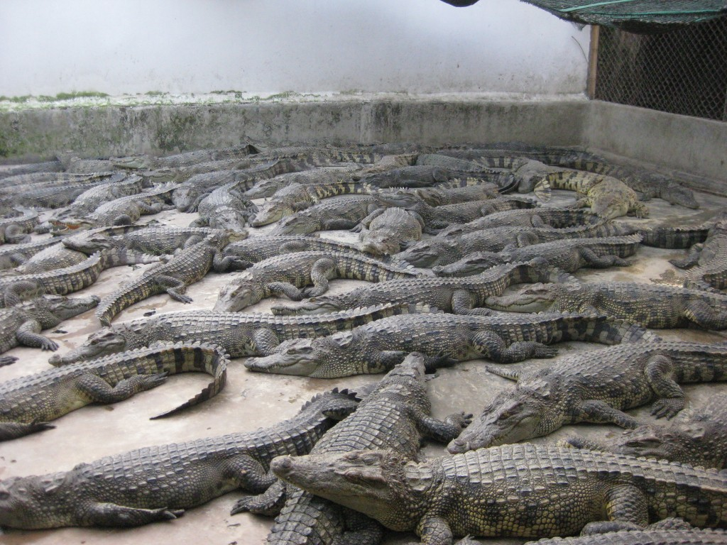 mekong 194