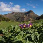 Boliwia – ziemniaczane etiudy