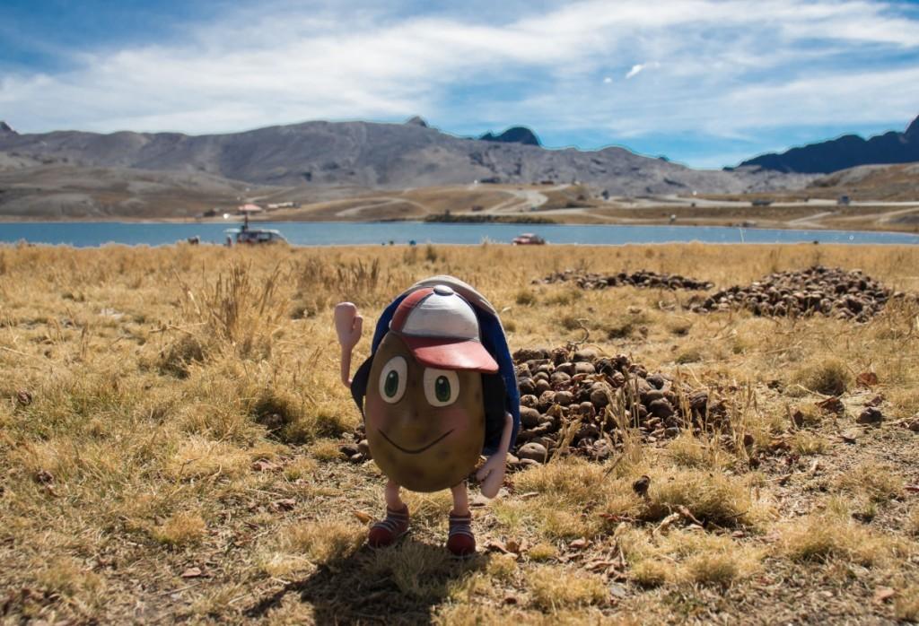 Ziemniak podróżnik